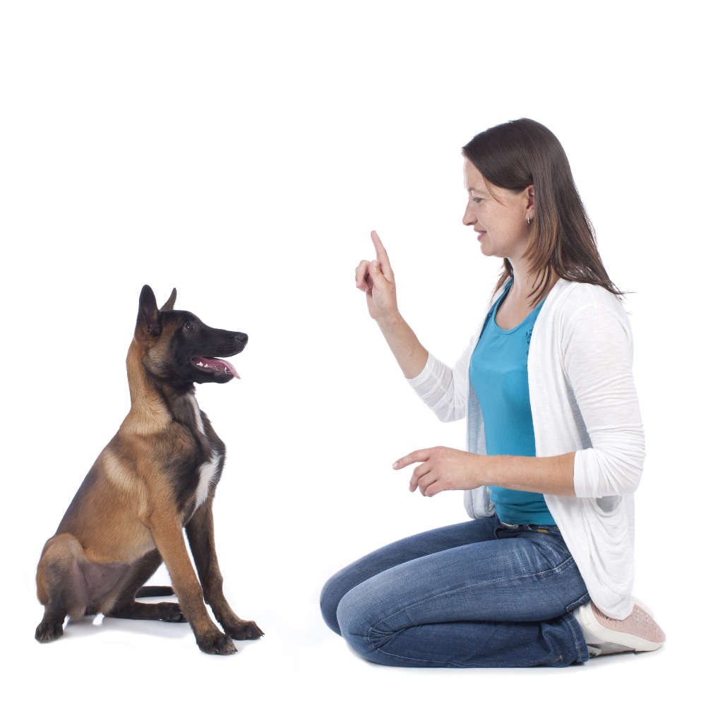 dog-training-using-the-13-ds