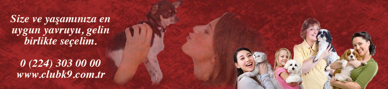 Satılık Yavru Köpek İlanları