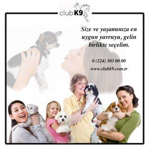 yavru_kopek_satis